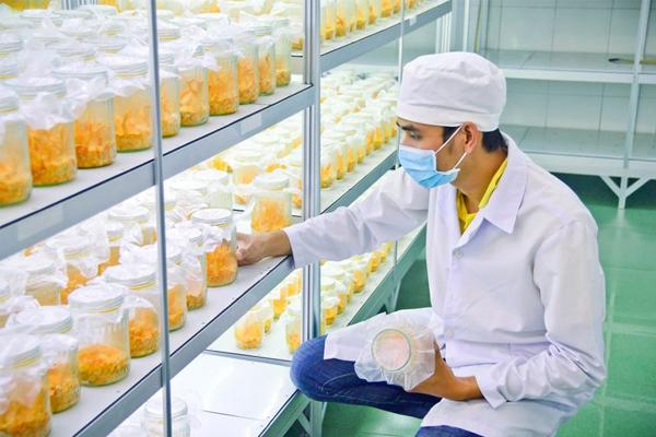 Đông trùng hạ thảo do Hazushop phân phối đều đạt chuẩn chất lượng